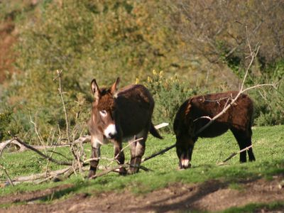 Entrambasaguas cottage rental - donkeys are making a come back in this area