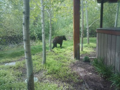Wildlife. Rare to see a juvenile black bear, but we have beaver, elk and ducks!