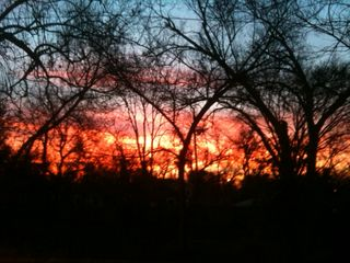 Austin cottage photo - Sunrise, 1/11/2013. Taken from front door.