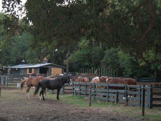 Sea Pines townhome photo - Lawton Stables on Plantation Drive for trail rides