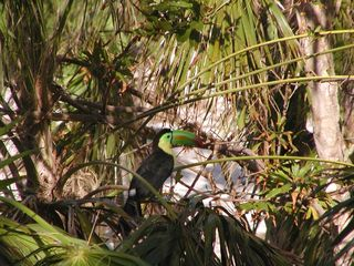 Tankah villa photo - Great birdwatching at the house!