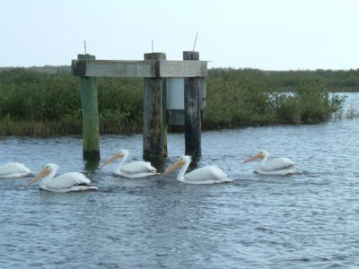 Aransas County- Famous Birding Area