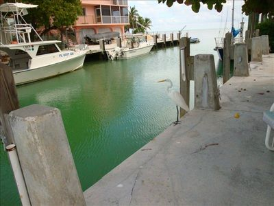 Come fish right from the dock or just enjoy the breeze & tranquility.