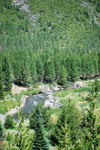 Deschutes River, Bend. Great fishing, kayaking, whitewater rafting and more.