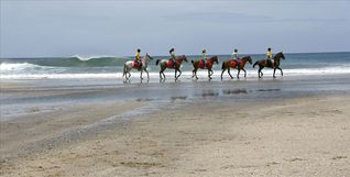 Playa Avellana house photo - Horse Back Riding