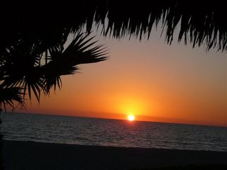 Longboat Key condo photo - Sunset thru the palms