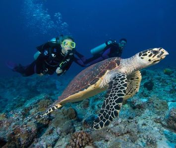 Fabulous snorkeling and scubadiving in the tropical waters