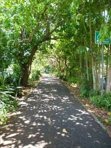 Use our bikes or walk on the peaceful bike path to Waimea or Pipeline