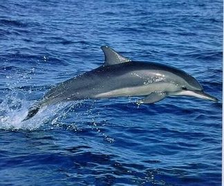 Take time out for an superb Gibraltar Dolphin Trip