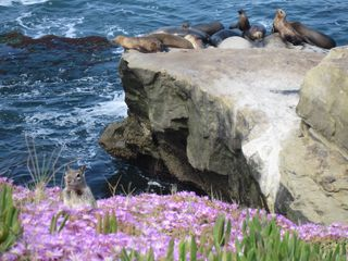 La Jolla cottage photo - Sea Lions and La Jolla Cove