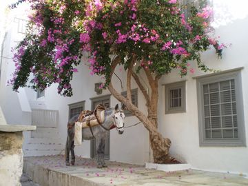 As there are no cars on Hydra, donkeys/mules are used to transport luggage