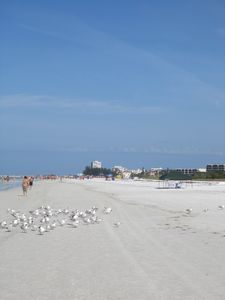 Gorgeous sandy beaches-- perfect for walking, running or bike riding!