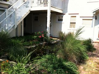 Provincetown condo photo - Koi pond