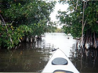 Carolina house photo - Kayak in mangoves