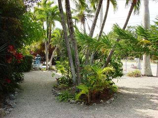 Key Largo house photo - Tropical plant paradise