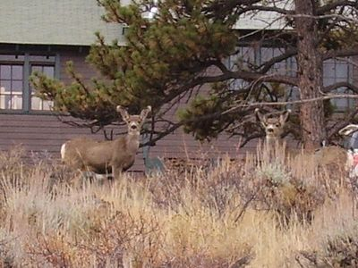Wildlife is very common around Pinecone Cottage