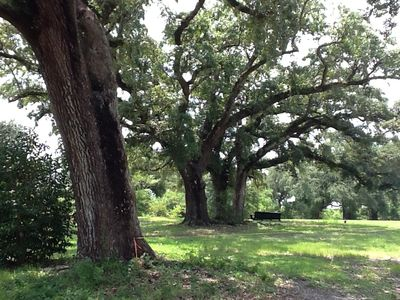 You'll find a swing under the oaks to sit listen and look for birds