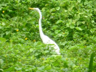 San Juan apartment photo - A solitary egret in the nearby lot.