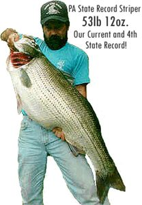 SUPER Striper fishing in the spring and fall seasons. State record caught here.
