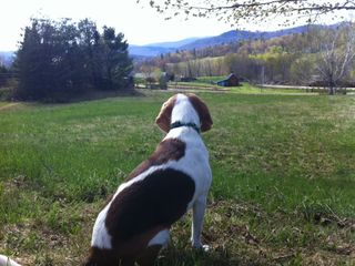 5 Acres of land for you to enjoy. Pets welcome!