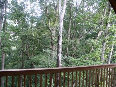 A view of the woods from the rear deck
