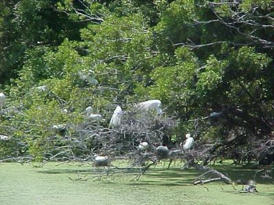 View of the Bird Sanctuary on Harbor Island