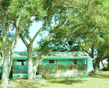 Large old Spanish Oaks shade yard