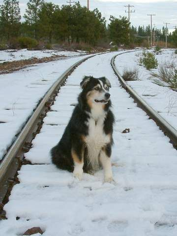 Milo, waiting for the train