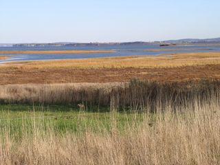 Annapolis Valley house photo - Salt marsh & Minas Basin from property