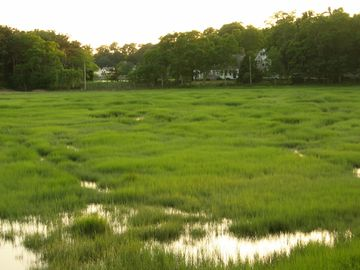 Sunporch view of marsh during a summer high tide.