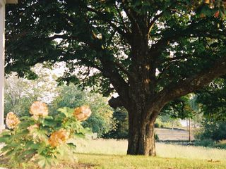 Tiverton farmhouse photo - Chestnut tree overlooking Nonquit Pond