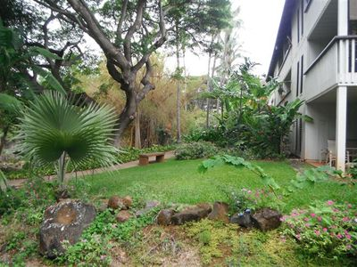 401 is midway in photo of back lanai pathway. Red Ginger, banana,bamboo, etc.