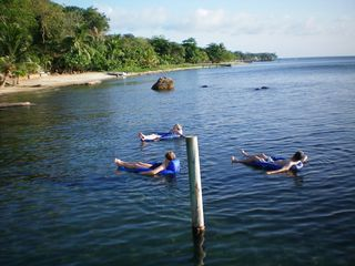 Roatan house photo - Favorite activity - floating in the water with drink in hand on a hot day