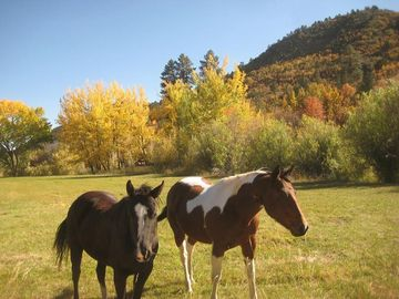 Working horse ranch at HappyOurs will delight everyone