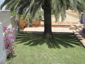 Front Garden with large palm tree