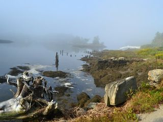 Westport Island house photo - A misty morning in Heal Cove