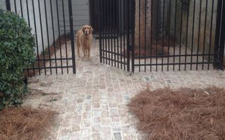 Harbour Town house photo - Entryway brick courtyard, dog not included in rental!