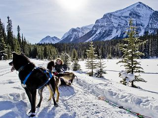 Canmore condo photo - A unique and memorable experience ... Dog sledding in the Rockies!
