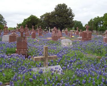 Fredericksburg Bluebonnets at Catholic Cemetery