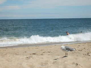 Rehoboth Beach villa photo - Another great day at Rehoboth Beach!
