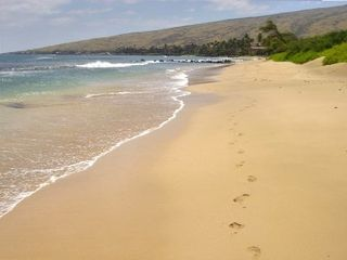 Maalaea condo photo - Sugar beach has miles of beach perfect for walking, running, snorkeling, etc.