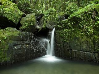 Fajardo condo photo - El Yunque National Forest- 15 minutes from Peña Mar...a must to visit.....