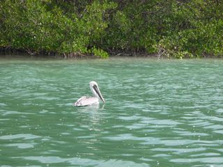 Islamorada house photo - Abundance of wild life in the keys