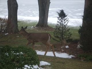 Paw Paw cottage photo - early morning visitors