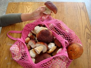 Taos house photo - Boletus Mushrooms Gathered on an August Hunt.