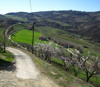 Road up to Cascina Bricchetto Langhe