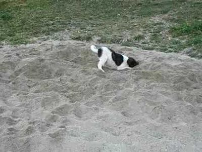 Dogs love the sand too!