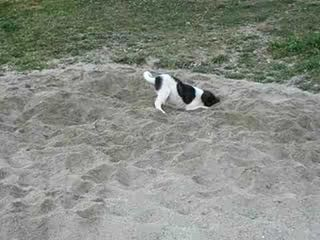 Dogs love the sand too! - Lincoln City house vacation rental photo