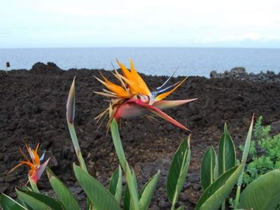 You'll be as happy as this Bird of Paradise!