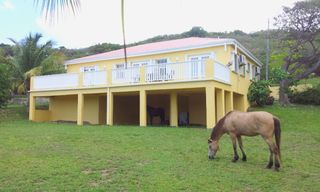 St. Croix house photo - Horses graze on the half acre every day.